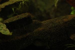 onderzee en garnaal kleur